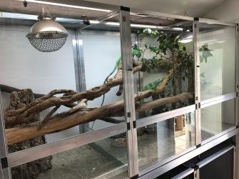 Fijian Iguana Enclosure