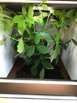 Leaf Insect Vivarium
