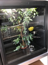 Green Tree Python Vivarium