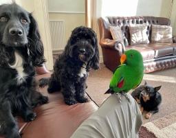 Ellie, Millie, Freddie & Pem
